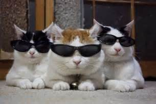 cool for cats cats wearing glasses cats with glasses glasses on cats