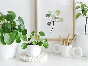 Pilea Pflanze Kaufen : die besten 25 zimmerpflanzen ideen auf pinterest innen ~ Michelbontemps.com Haus und Dekorationen