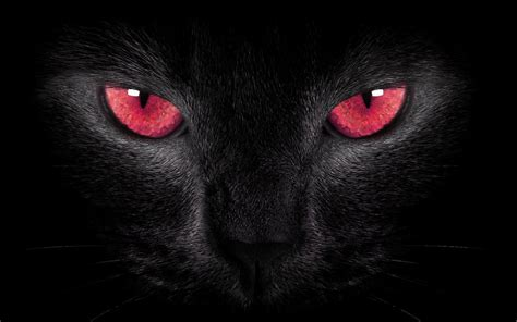 black cat by welshdragon on deviantart