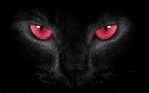 Black Cat Red Eyes by welshdragon on DeviantArt