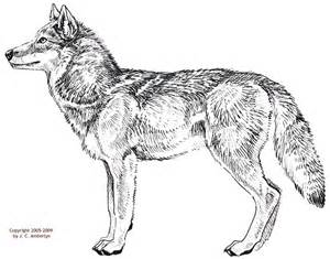 Full Body Wolf Drawing