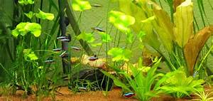 Aquarium Einrichten 60l : aquarium besatz beispiele aquarium fische ~ Michelbontemps.com Haus und Dekorationen