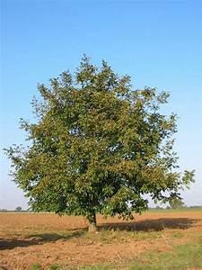 Baumhoroskop Berechnen : nussbaum baumhoroskop 4you ~ Themetempest.com Abrechnung