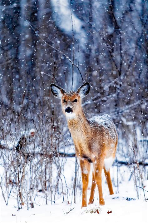 winter animal wallpapers hd images
