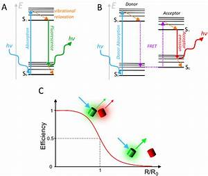 The Basic Principles Of Fluorescence And Fret   A