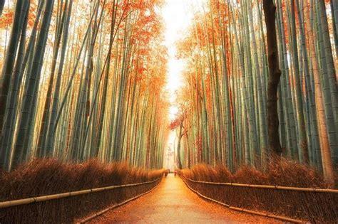 florestas mais incriveis  mundo confira lindas imagens