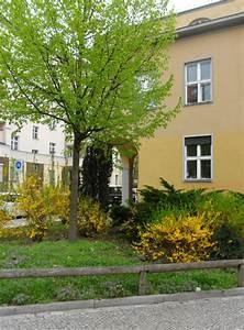 Fassade Neu Verputzen : materialien f r ausbauarbeiten fassade neu verputzen ~ A.2002-acura-tl-radio.info Haus und Dekorationen