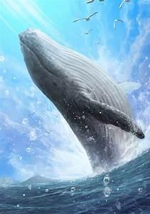 Blue Whale  Photo