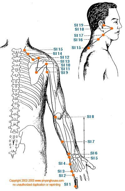 acupuncture grossesse si e 25 best acupuncture images on acupressure
