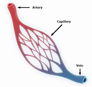 Lexicolatry  Capillary