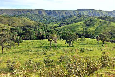 Brazil Savana at Ibiraci, MG ? Focusing on Wildlife