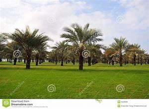 Palmier De Jardin : jardin de palmier photo stock image 4428080 ~ Nature-et-papiers.com Idées de Décoration