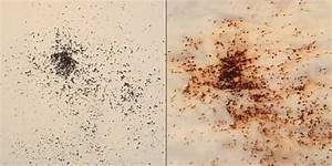 Flohstiche Beim Menschen Behandeln : trick bei fl he verdacht beim haustier hilft k chenpapier test ~ Eleganceandgraceweddings.com Haus und Dekorationen