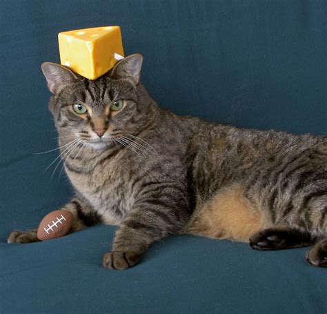 cat cheese cheese rox 187 blog archive 187 cheeseheads on my cats