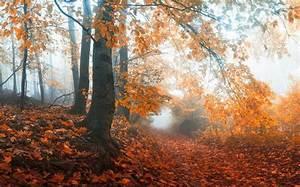 Mist, Sunrise, Fall, Path, Trees, Nature, Landscape