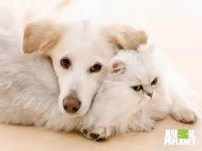 dogs cats dogs vs cats images dogs and cats hd wallpaper and