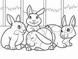 Colouring Rabbit Sheet Kleurplaat Konijn Animaatjes Dieren Coloring sketch template