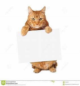 Tabby Cat Holding Blank Sign Stock Image - Image of ...