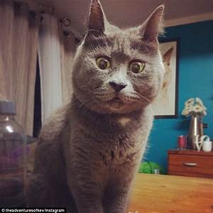 Kevin the permanently surprised cat wins the Internet with ...