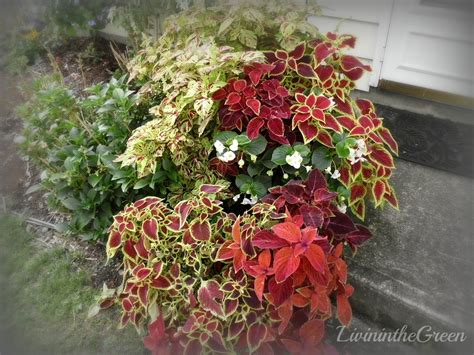plants for containers livin in the green container plant how to s
