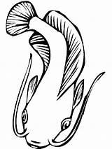Catfish Coloring Drawing Clipart Printable Drawings Fish Cliparts Pez Minecraft Clip Dibujo Template Sketch Realistic Library Adults Swimming Mycoloring Favorites sketch template