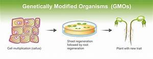 Genetically Modified Organisms Stock Illustration