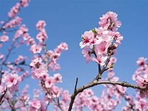 Planter Un Cerisier : comment planter un cerisier avant l 39 hiver fiskars ~ Melissatoandfro.com Idées de Décoration
