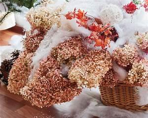 Balkon Bäume Im Topf : hortensie im topf berwintern so sch tzen sie sie vor k lte ~ Frokenaadalensverden.com Haus und Dekorationen