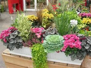 Plantes D Hiver Extérieur Balcon : comment composer une jardini re d 39 hiver id es et conseils ~ Nature-et-papiers.com Idées de Décoration