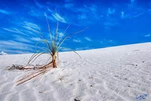 White Sands New Mexico Desert