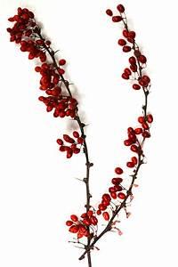 Deko Zweige Rote Beeren : serviettenringe diy low budget idee f r weihnachten kreative fotografie hacks foto tipps ~ Sanjose-hotels-ca.com Haus und Dekorationen