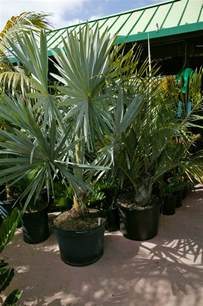 Different Types of Palm Tree Plants