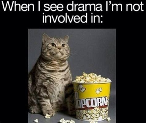 Drama Meme - when i see drama i m not involved in my life be like pinterest i love lol and love