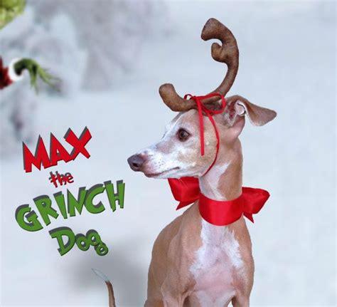 grinch dog ideas  pinterest max