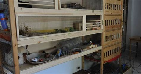 multi level wood guinea pig cage source httpswww