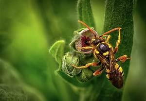 Détruire Un Nid De Guêpes : comment d truire un nid de gu pe en terre les jeunes ~ Melissatoandfro.com Idées de Décoration