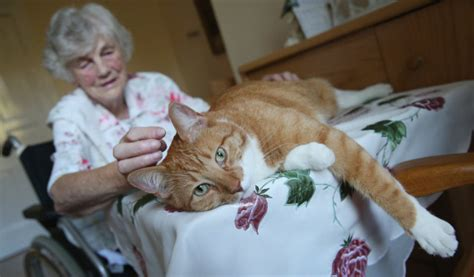 therapy cats therapy animals promote wellness ease stress and anxiety canada com