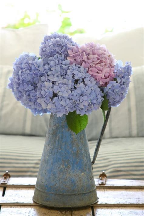 pink lavender hydrangeas pictures   images