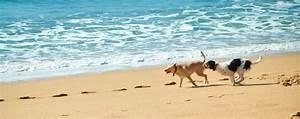 Urlaub Mit Hund Am Meer Italien : urlaub mit hund reisetipps italien ~ Kayakingforconservation.com Haus und Dekorationen