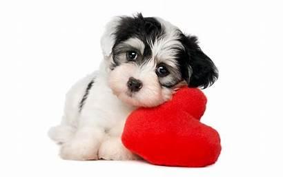 Puppies Dog Background Hearts Animals Pet Puppy