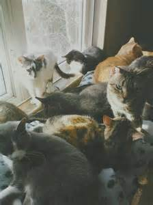 lots of cats lots of cats cats picture