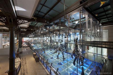 le bureau de victor bureau greisch musée des sciences naturelles à bruxelles
