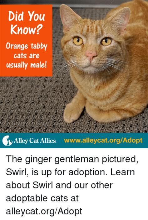 Tabby Meme - 25 best memes about alley cats alley cats memes