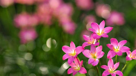 Best Beutiful Most Beautiful Pictures Of Flowers