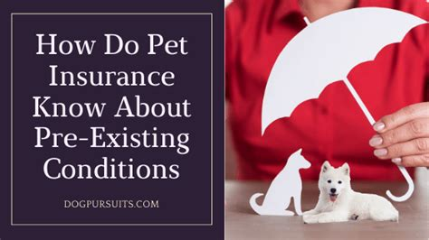 While you can still buy pet insurance, your policy will exclude the particular condition your pet developed before starting coverage. How Do Pet Insurance Know About Pre Existing Conditions
