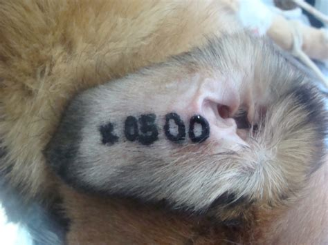 neutered dog  animal rescue sofia