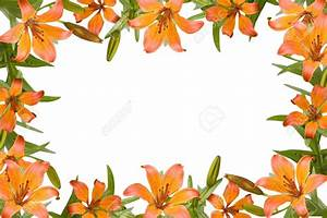 Orange Flower clipart frame - Pencil and in color orange ...