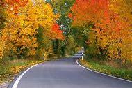 Autumn Leaves Fall Color Trees