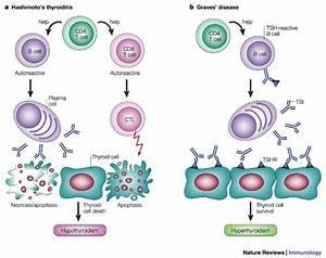 Pharynx & Larynx-3 | DNBhelp