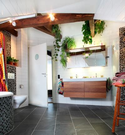 choisir la bonne plante pour sa salle de bain planetebain